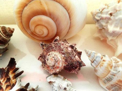Deniz kabukları koleksiyonu